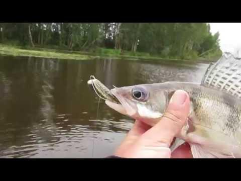 Ветлуга Боровская осень 2017! Рыбалка на спиннинг! Упустили судака!!!