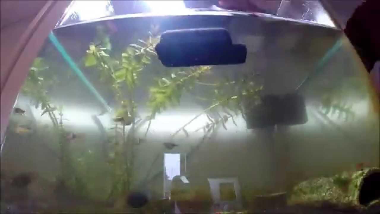 Garnelen aquarium wasserwechsel youtube for Aquarium wasserwechsel