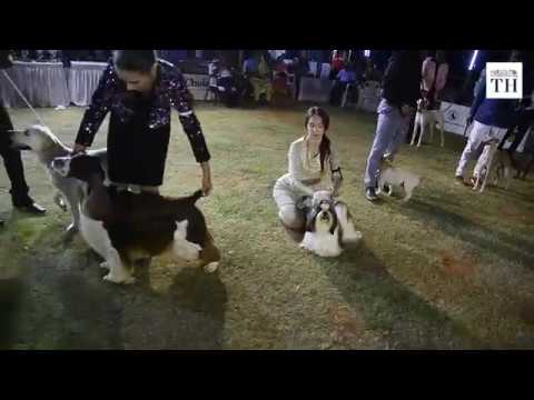 All Breeds Championship Dog Show in Chennai