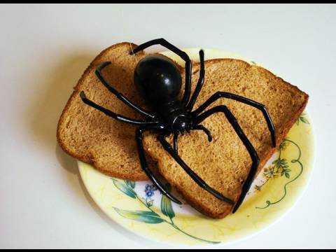 Giant Black Widow Spider Video
