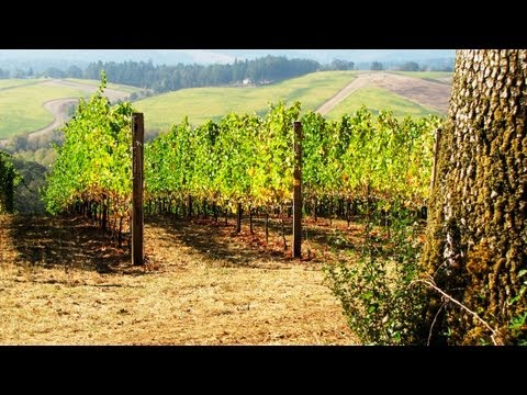 Agriculture and Public Health: One Grape Grower Speaks Out