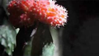 Watch Nine Black Alps Porcupine video