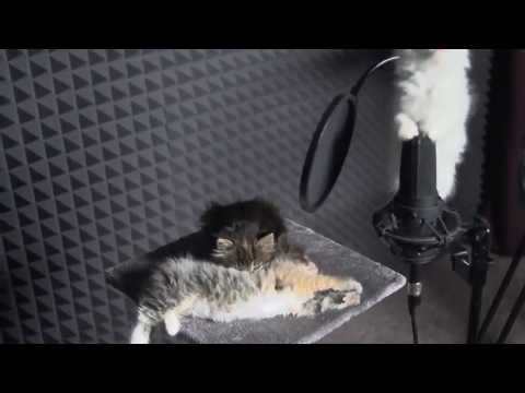 Cute KITTENS Sing In AUTOTUNE