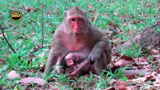 Watch!! What is happening to Cute Baby with Pretty Mum?[Angkor Daily]160