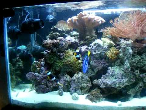 Saltwater aquarium youtube for Google fish tank mrdoob