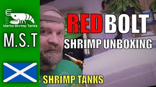 Unboxing Delicate Redbolt Shrimp But Are They All Alive?- ⭐⭐⭐⭐⭐