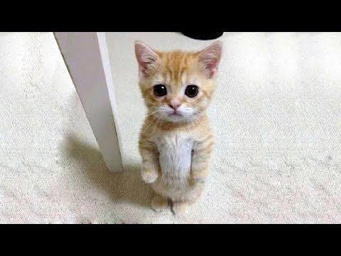 猫の画像 p1_19