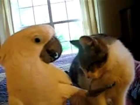 Заботливый попугай