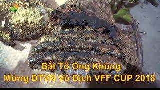 Bắt Tổ Ong Khủng I Cháo Nhộng Ong I Nhộng Ong Xào Măng Chua I Lẩu Ba IMừng ĐTVN Vô Địch AFF Cup 2018