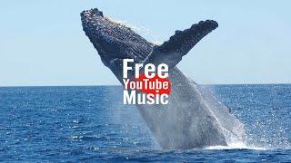 Blue Whale - Quincas Moreira (Alternative & Punk   Dark) - Free YouTube Music