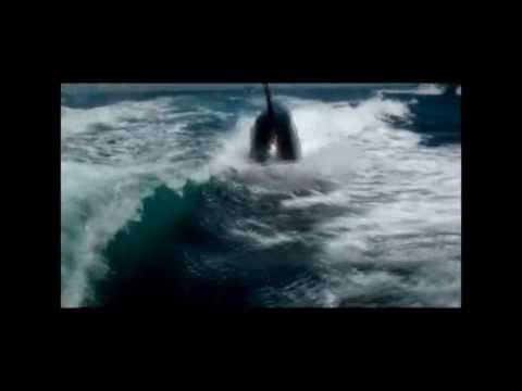 Couple's Amazing Close Encounter with Surfing Killer Whales in Boat Wake