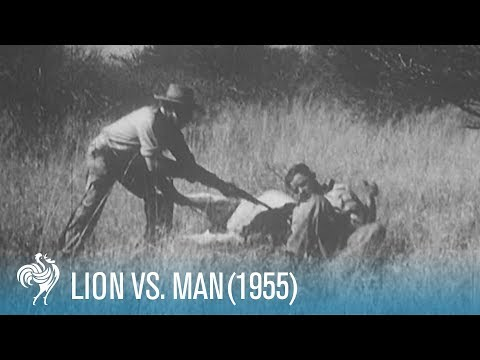 Lion v Man (upsetting hunting scenes)