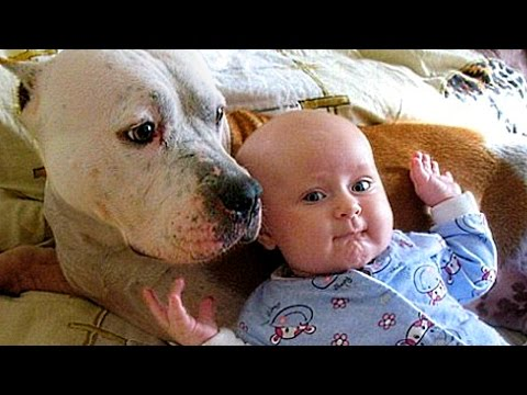 Pitbull Love Baby Compilation NEW