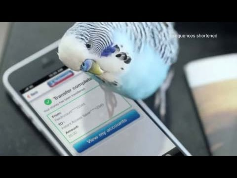 Watch Reg our loveable Budgie using our easy to use Mobile Banking app � because we believe managing your money should be as easy as one two tweet. The app is free to download and is top...