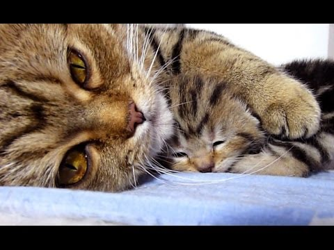 Mom Cat talking to her Cute Meowing Kittens | Generation