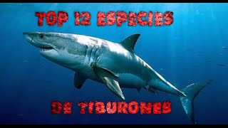 Top 12 especies de tiburones