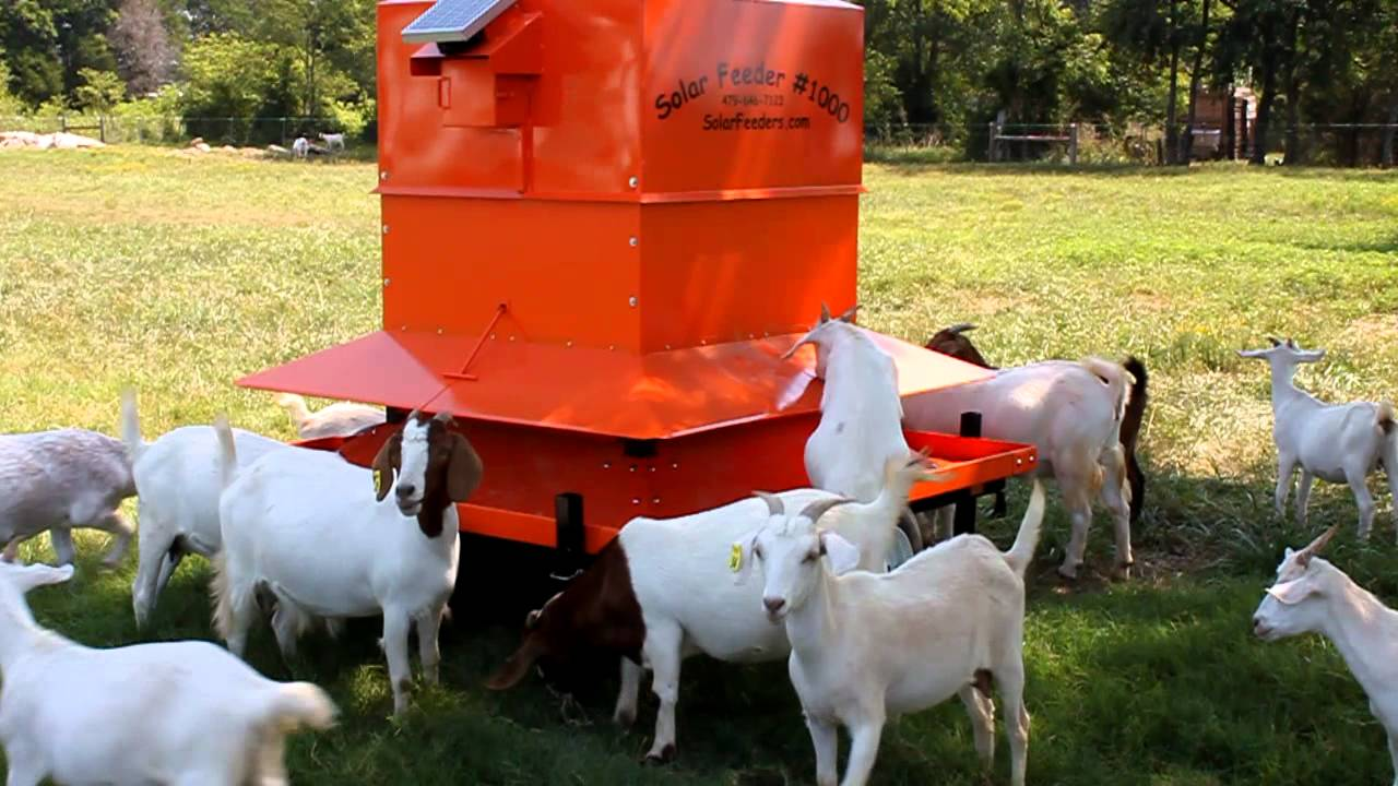 Goat feeder youtube