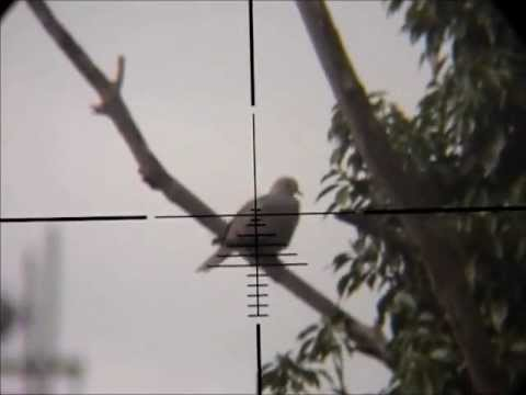 Pigeon Hunting With Air Rifle http://www.howtomakeonline.org/ggoAVMoneydp8-Vf/Air-Rifle-Pigeon-Hunting-Slow-Motion-(Nov-4,-2010).html
