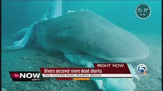 Divers uncover more dead sharks