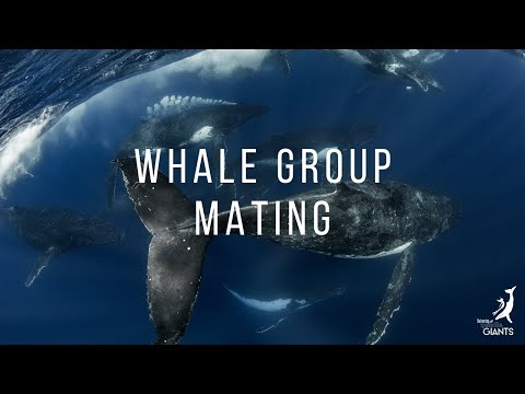 Whale Group Mating
