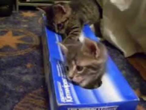 居心地がいいのかな?!空き箱を占領する子猫