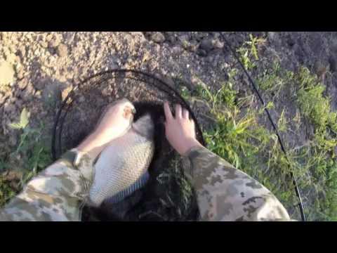 Ловля карпа на горох июнь 2016. Рыбалка, красный горох на волос-это победа))