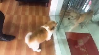 Funny Dogs behind glass door !!