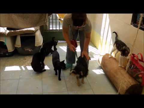 Animalinneed: Video of Kira