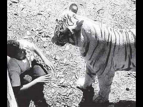 Drunk man killed by white tiger at New Delhi Zoo