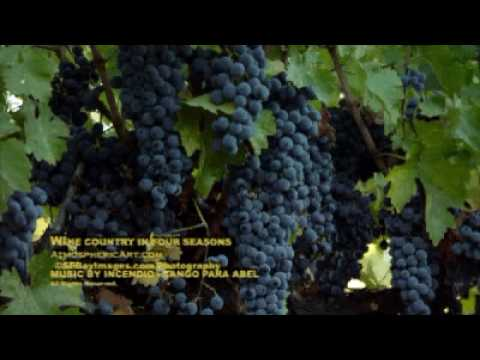 Napa Valley in Four Season Northern California Wine Country