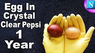 Egg In Crystal Clear Pepsi For 1 Year