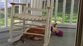 STUCK! Under the Rocking Chair ~~ Hank a Dog Vlog