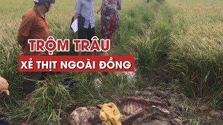 Trộm con trâu 500 kg của nông dân mang ra đồng xẻ thịt, chừa lại bộ lòng