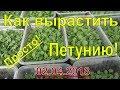 Как правильно выращивать петунию в домашних условиях mp3