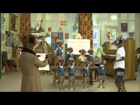 Meerpup Choir - comparethemeerkat.com Advert