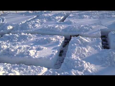 Dog Gives A Shit Less About Snow Maze