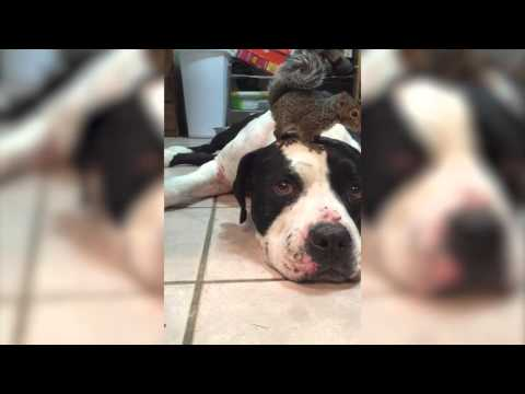 頭の上にいるリスを猫から守る犬