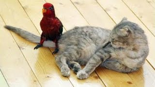 Funny Parrots Annoying Cats
