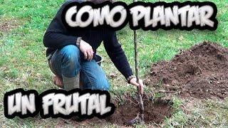 Como Plantar Un Arbol Frutal || Vergel Organico || La Huertina De Toni