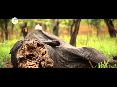 Cameroon Elephant Slaughter