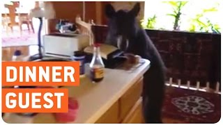Bear Tries To Burglarize Home | Got Food?