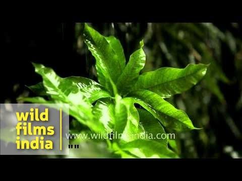 Heavy rain falls on green leaves - Delhi