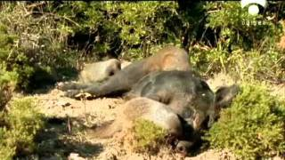 BBC Nature Documentary - The Devil in the Forest