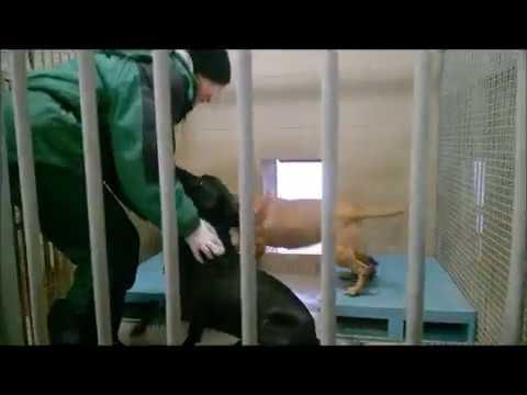 Jak Wygląda Praca Opiekuna Zwierząt W Schronisku