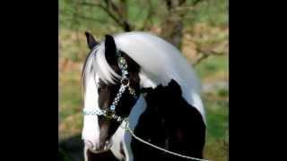 Watch Joe Nichols Old Cheyenne video