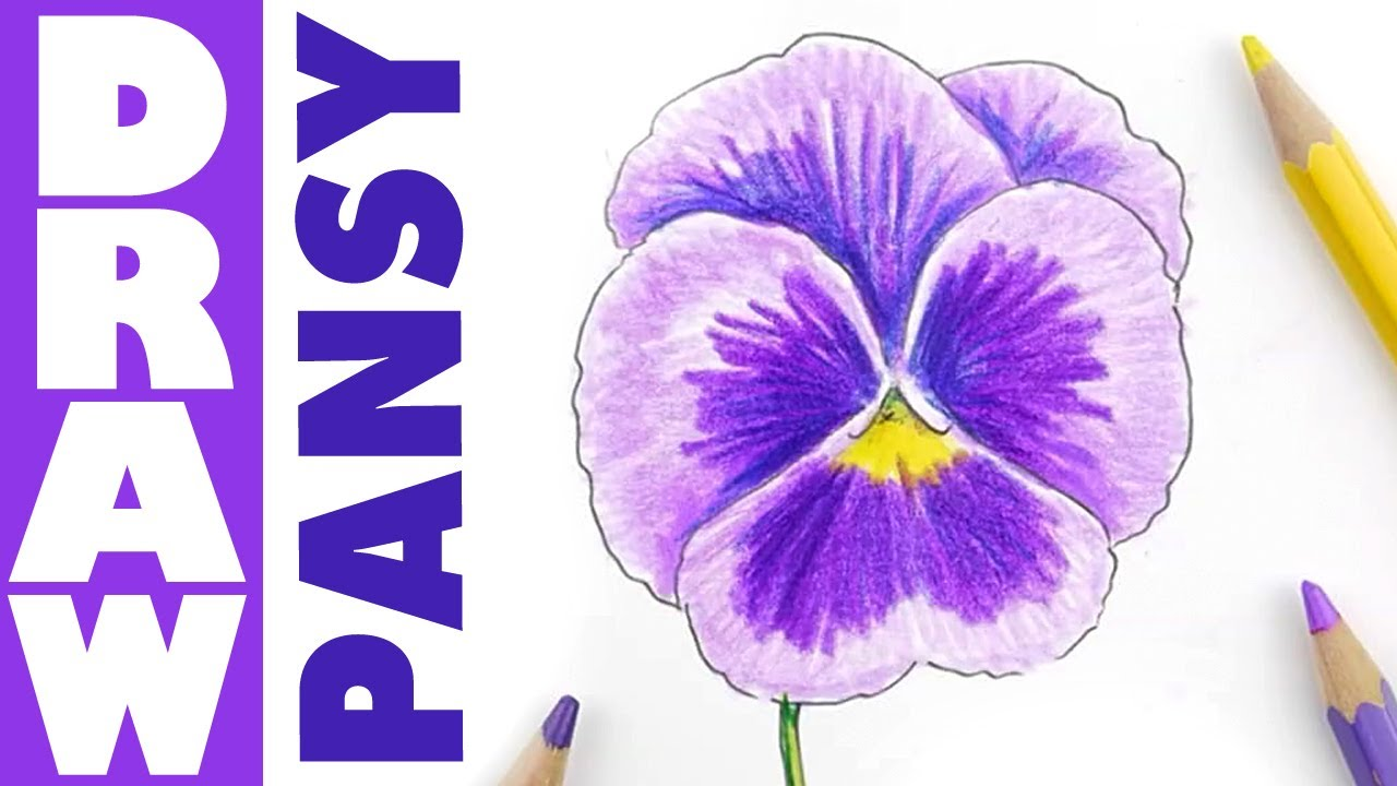 How To Draw A Pansy Youtube