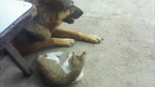Chuyện lạ yêu nhau như chó với mèo dễ thương quá dog love cat