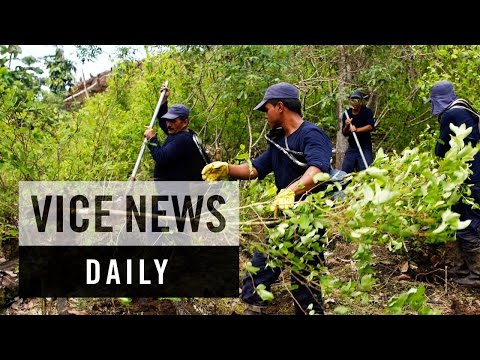 VICE News Daily: Coca Cultivation Surges in Colombia