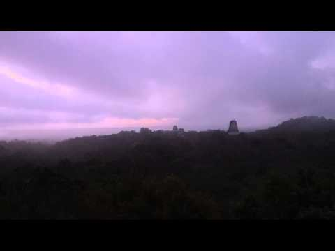 Monkeys roar at sunrise - Tikal Temple IV, Guatemala