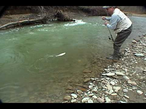 Brown Trout Western New York Get-Reel Fishing